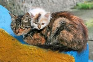 Приют для кошек1